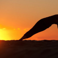 The Science of Physical Fitness And Its Importance For An Improved Quality Of Life