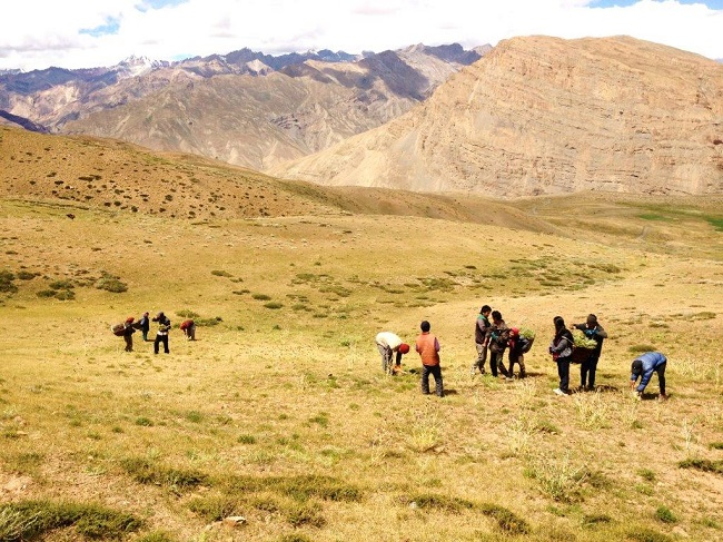 The Customary Cutting of Grass in the Highlands of Spiti