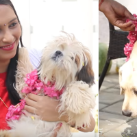 Kukur Tihar – The Day Dogs Are Worshiped, Appreciated, And Celebrated!