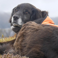 Meet The Only Dog In The World Who Saves The Endangered Mountain Parrots