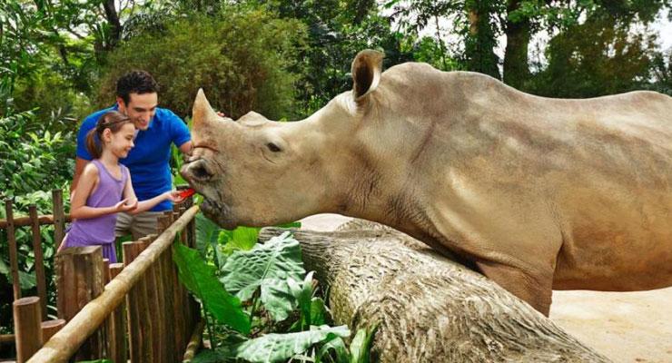 singapore zoo - things to do