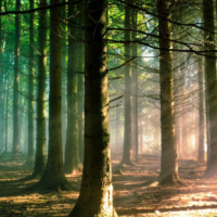Forest Bathing: Why This Healing Therapy In Japan Is The New Cool Thing?