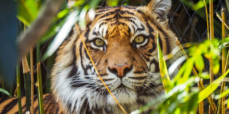 After Mumbai's Arrey Forest, 3.5 Lakh Trees To Be Cut In Jharkhand's Palamau Tiger Reserve. Really?